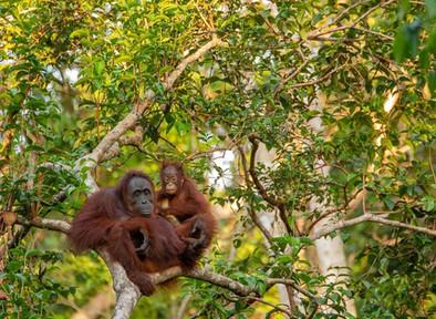 Moratorium: Apakah akan Menyelamatkan Indonesia dari Deforestasi?