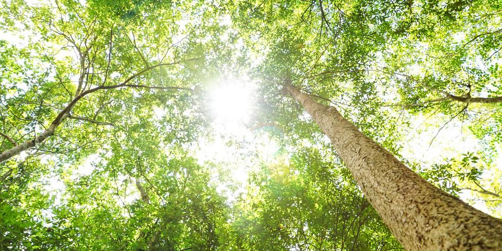 Naturlig boost av yoga, natur og matopplevelse