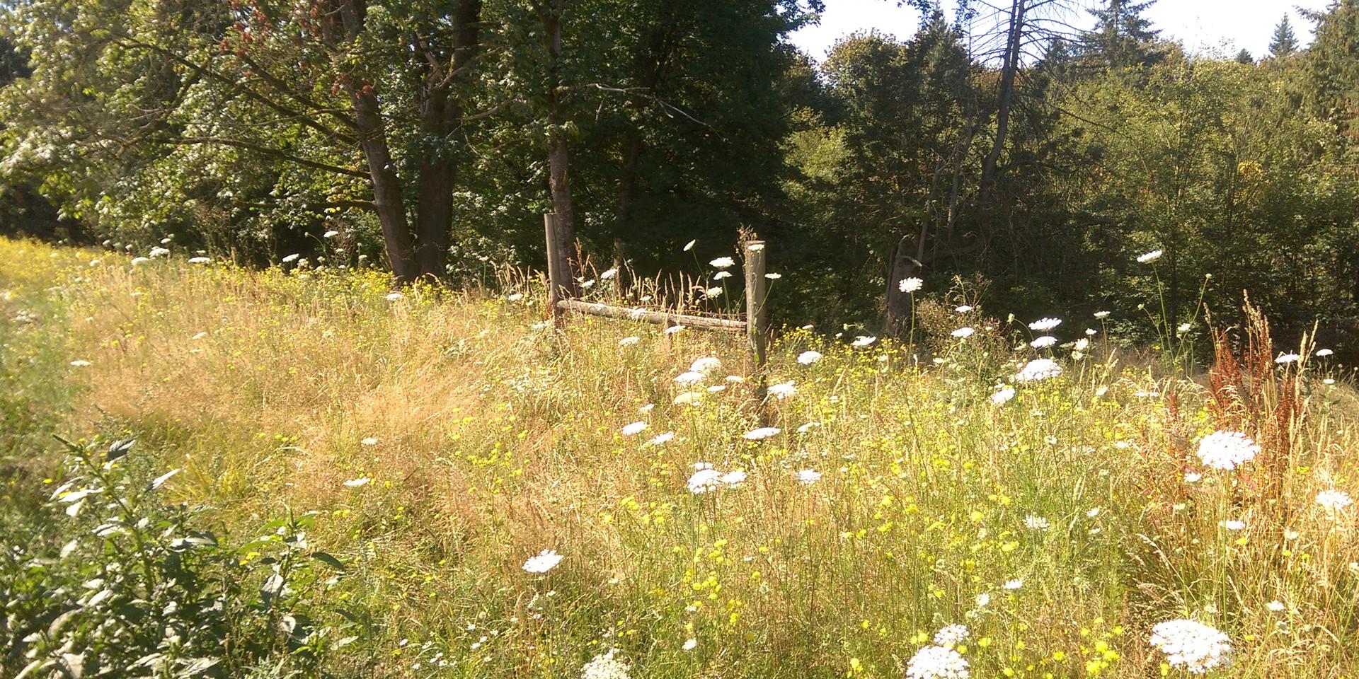 Wild and Wonderful edge of Garden