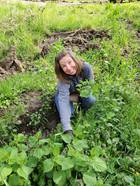 Lora picking Stinging Nettles