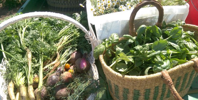 Garden Pickings