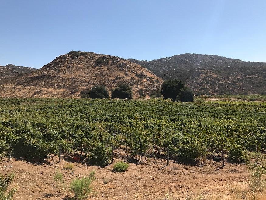Cañada del Trigo