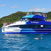 cream-trip-dolphin-viewing-G8.jpg