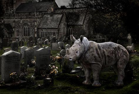 Rhino in Churchyard