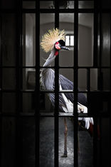 Bird in Cell