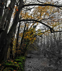 Pope's Wood, Gloucestershire