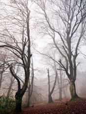 Crickley Hill, Gloucestershire