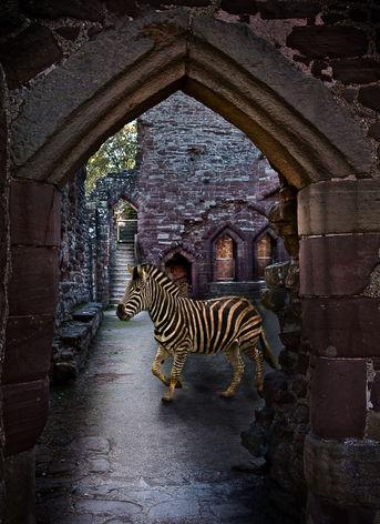 Zebra in Castle