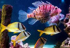 Blue Reef Aquarium Newquay, Cornwall