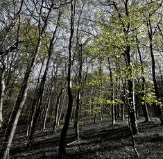 Standish Wood, Gloucestershire