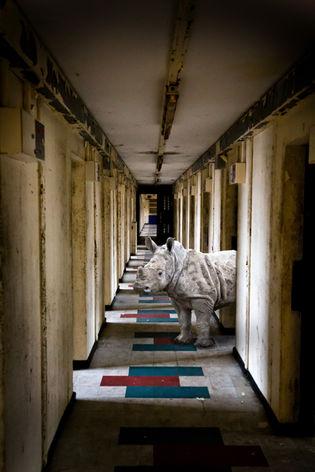 Rhino in Hall