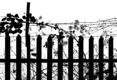 Barbed wire and brambles