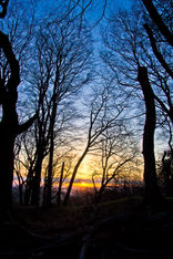 Nutters Wood, Cleeve Hill, Gloucestershire