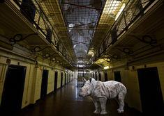 Rhino in Prison