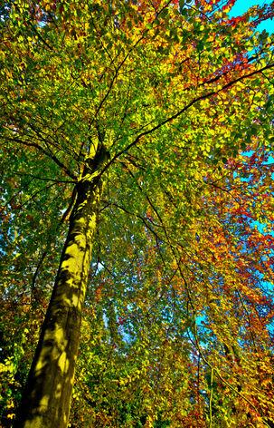 Batsford Arboretum, Gloucestershire