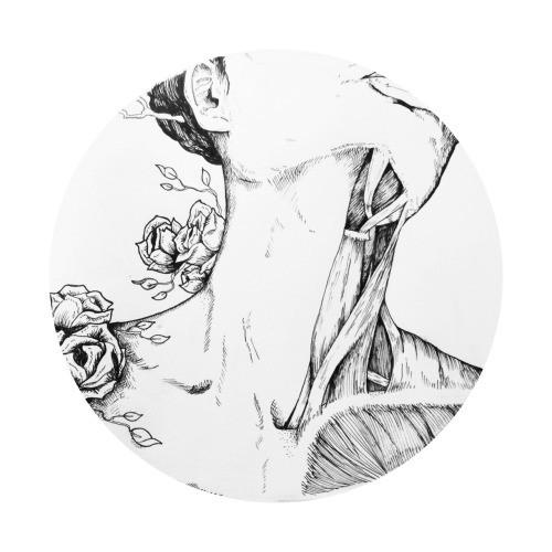 anatomy3.jpg
