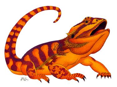 Oaxacan Bearded Dragon