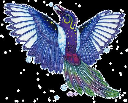 Oaxacan Magpie