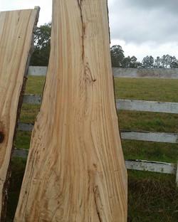 Camphor timber slab