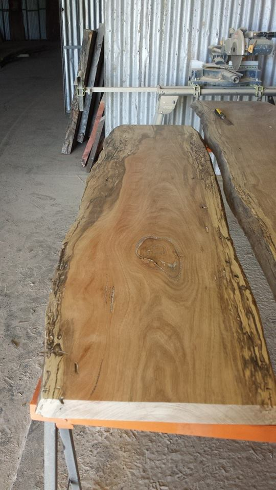 Spotted Gum small