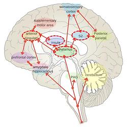 brain-matrix