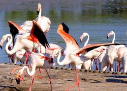 Etang Saumatre Haiti's largest lake