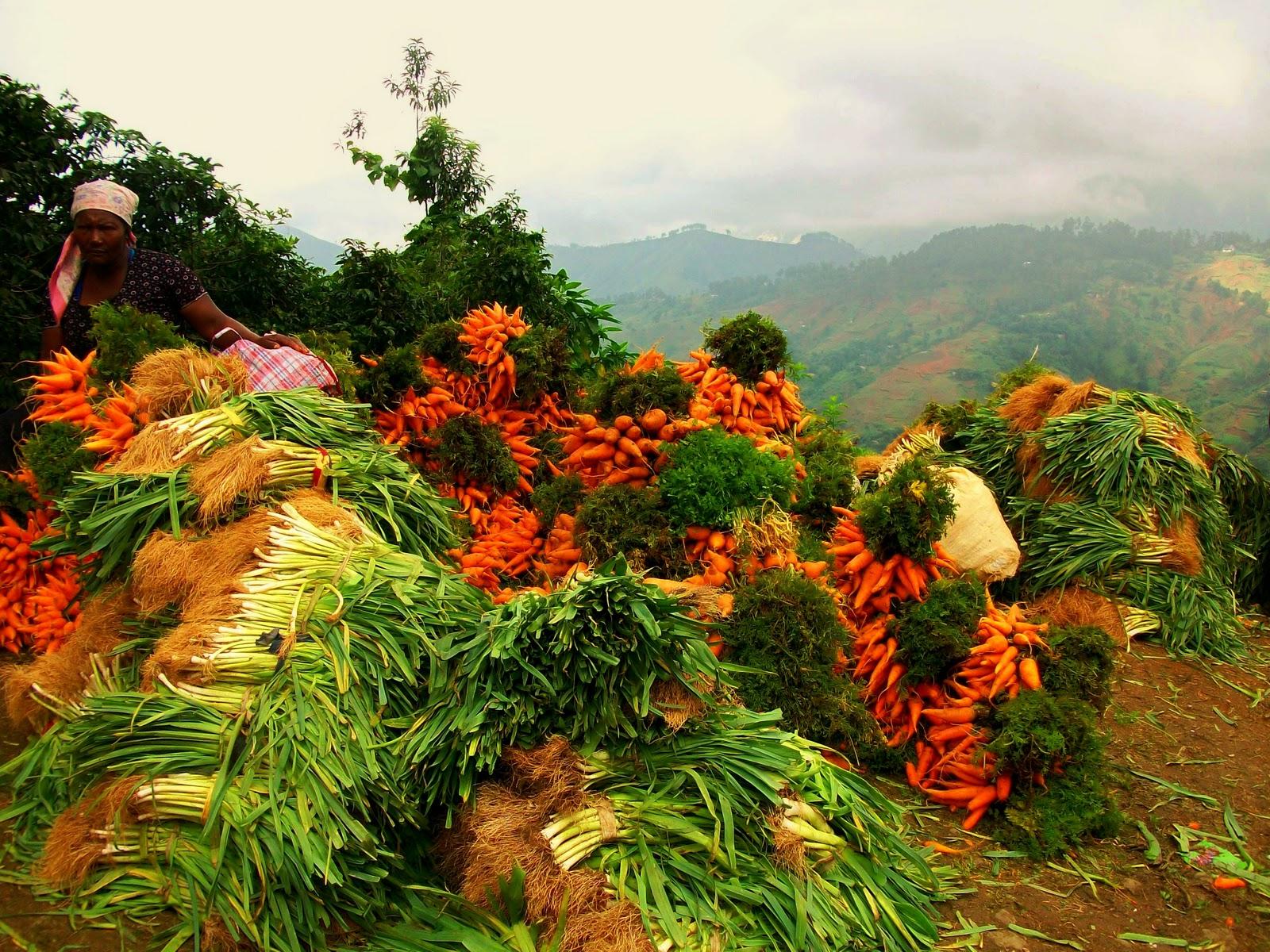 Discover Mountainous Kenscoff, Haiti