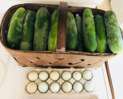 CUKES and EGGS