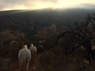 Cowboy life - herding horses in sunset