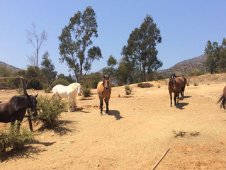 Feeding time for the horses