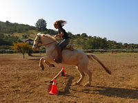 learn how to ride - horseback riding lessons