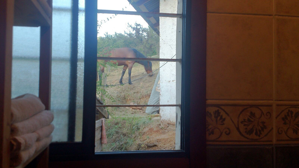 horse in the garden