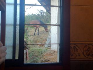 A horse in the garden