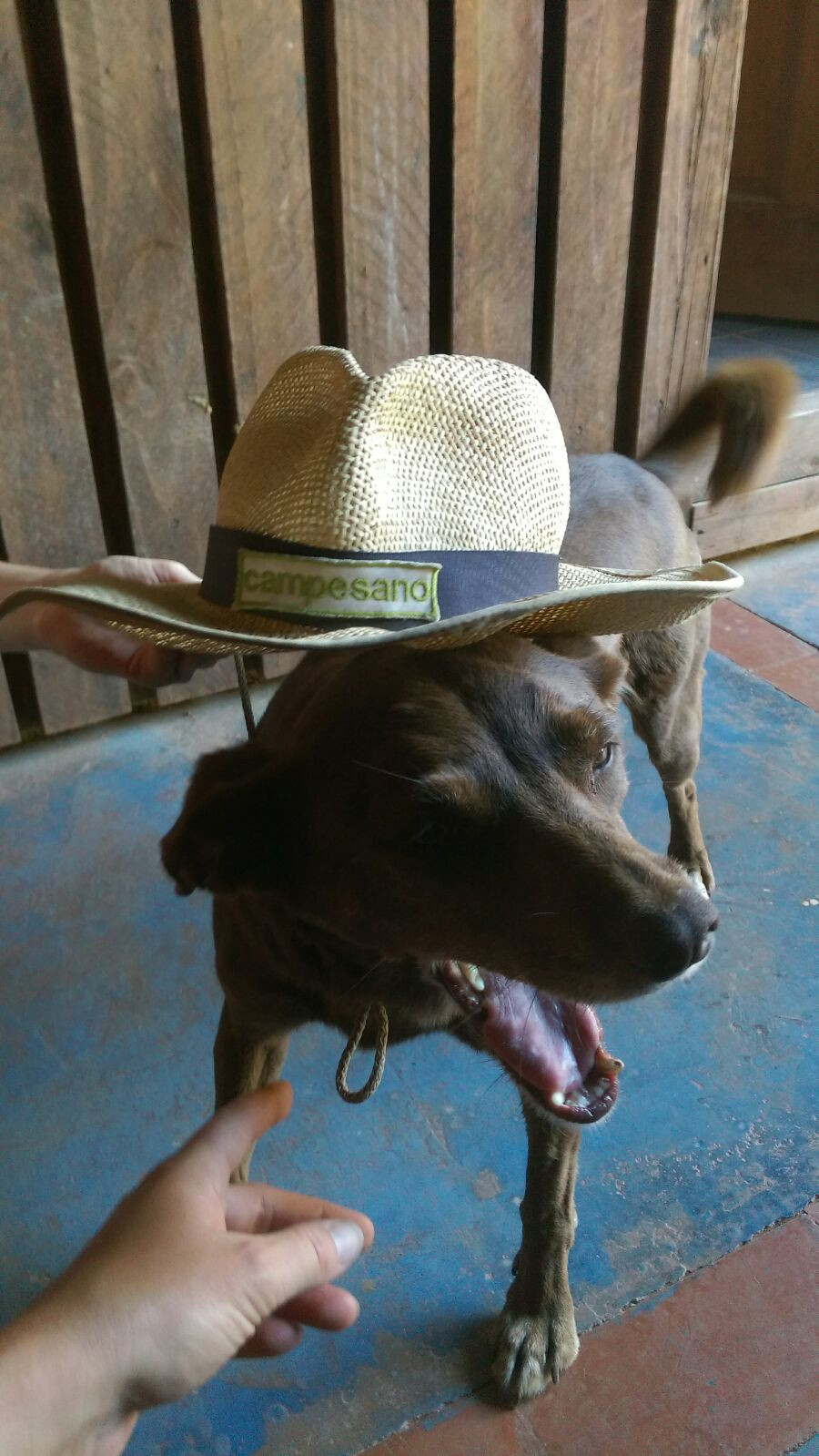 dog with straw hat as sun protection