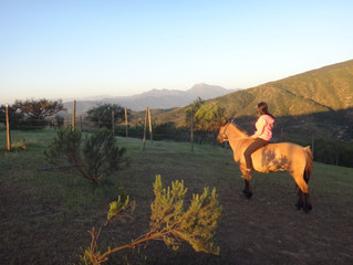 Horseback ride in the sunset