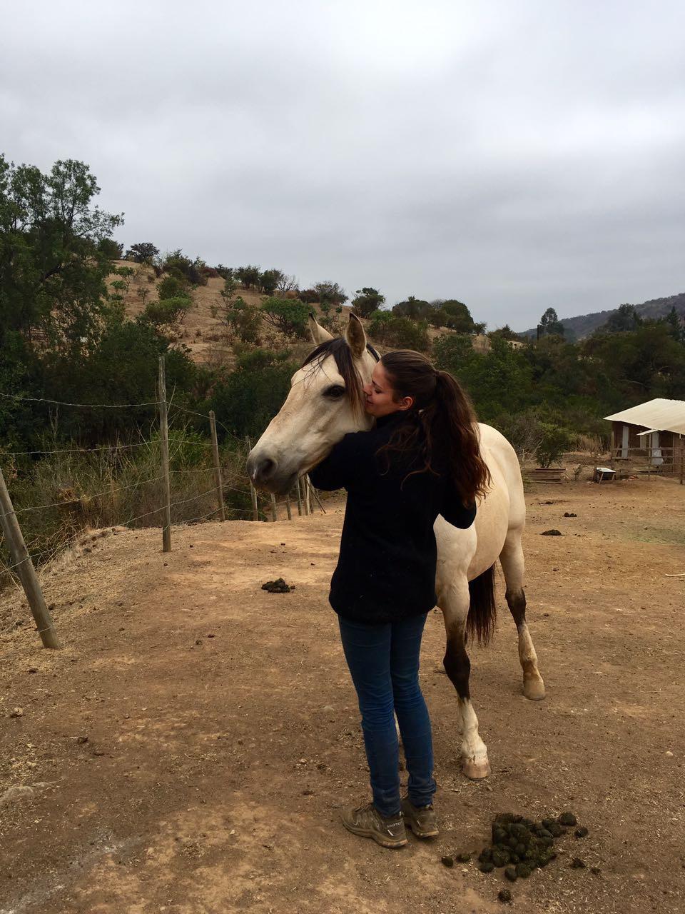volunteer workntravel horse ranch chile