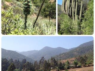 Campesano location - closed nature reserve near Valparaíso, Chile