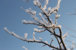Macro Frost