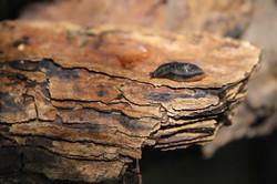 Macro Slug