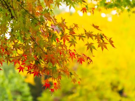 紅葉の富松神社&スタジオで七五三