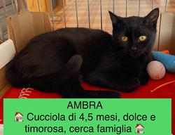 26/09/21 - AMBRA