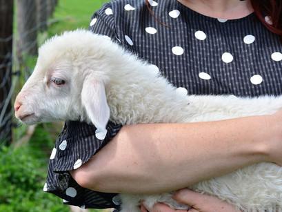 RETE SANTUARI DI ANIMALI LIBERI IN ITALIA:Fattoria della Pace Ippoasi Onlus (San Piero a Grado - PS)