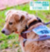 italpet_dog_run_2018_bis.jpg