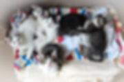 cuccioli.jpg