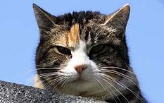 cat_adoz.jpg