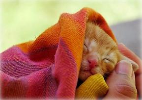 Tenere al caldo gattino.PNG