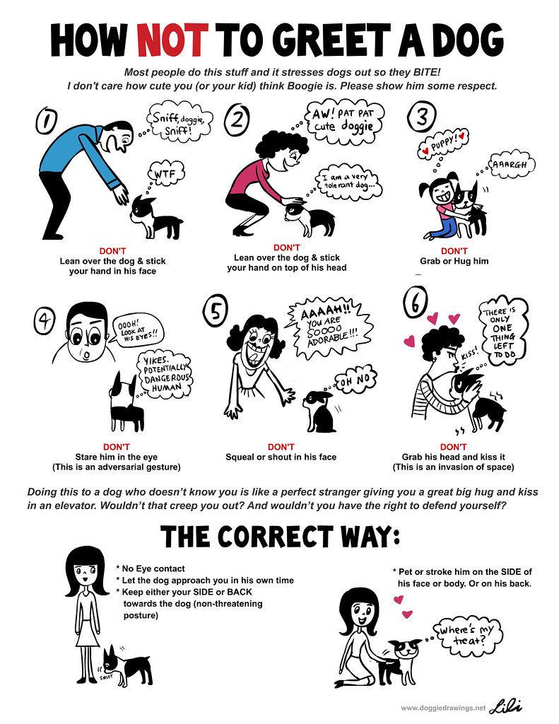 How to Greet a Dog.jpg