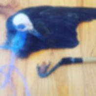 crow image.jpg