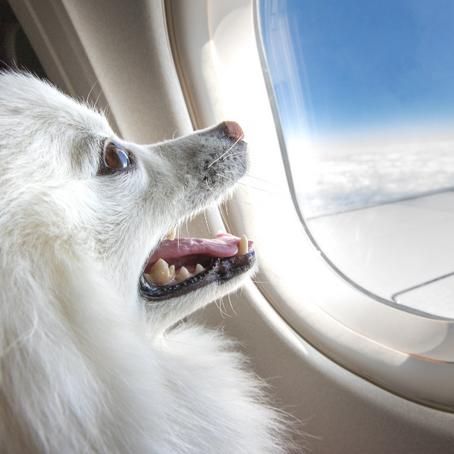הטסת כלב או חתול לחו״ל