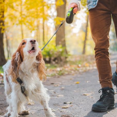 איך לגרום לכלב שלכם להפסיק לנבוח?